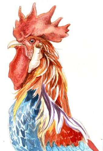 Cock, watercolor, 2011
